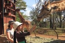 Centre pour girafes