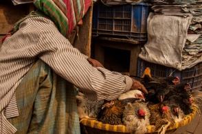 Marché de poulets