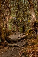 Chemin en forêt